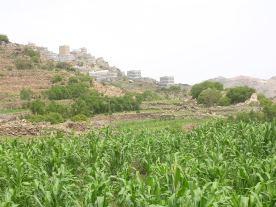 المشراقه وقرية عرهل الموسطه
